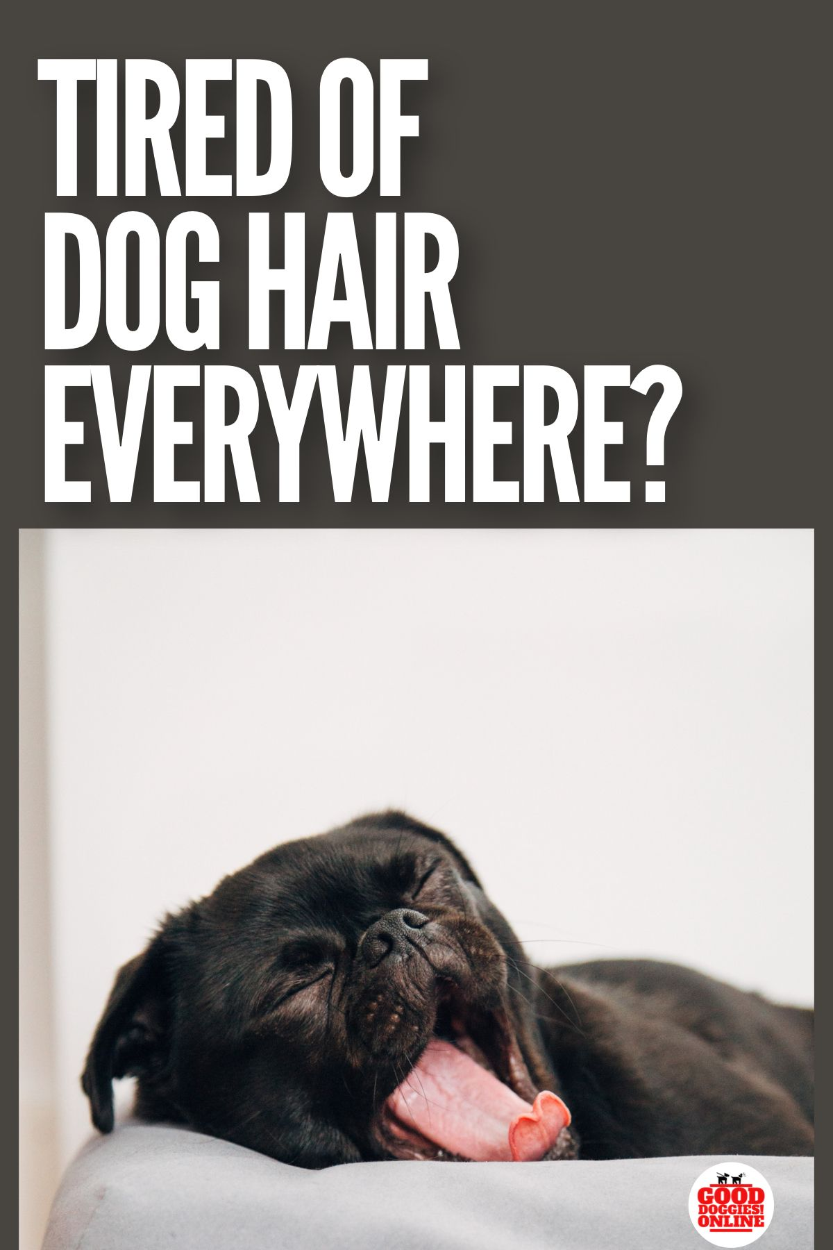 8 Real Dog Shedding Remedies That Will Make Your Life Less Hairy