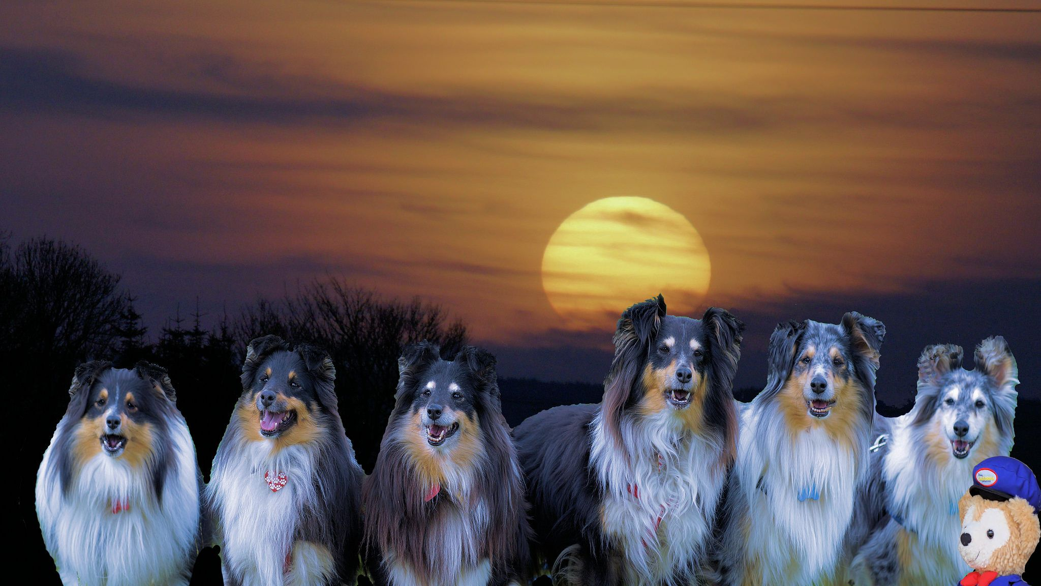 https://flic.kr/p/SmApzc   Moon shadows   I happen to mention to Halo yesterday, that due to our lack of funds ........Maybe he should get the CraZy Gang together and do a bit of Moonlighting to help balance the books.....Halo responded by saying no problem.....And  that he would get on the case this evening ......Great I thought......We will soon have money in my pockets again....But alias......And unfortunately......Halo and the CraZy Gang idea of doing a spot of moonlighting and mine…