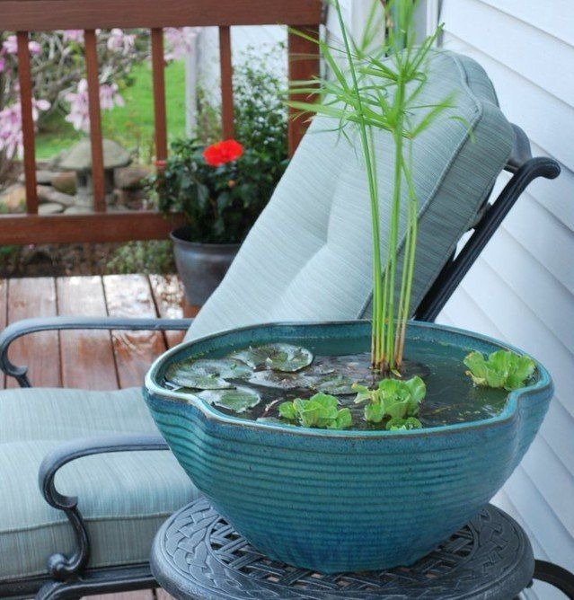 miniteich balkon anlegen pflanzen ausw hlen seerosen gardening balkony in 2018 pinterest. Black Bedroom Furniture Sets. Home Design Ideas