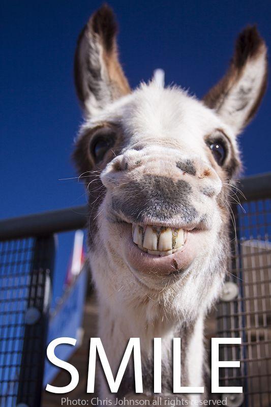 MY FUNNY DONKEY PHOTO..SMILE | Happy | Funny animal ...
