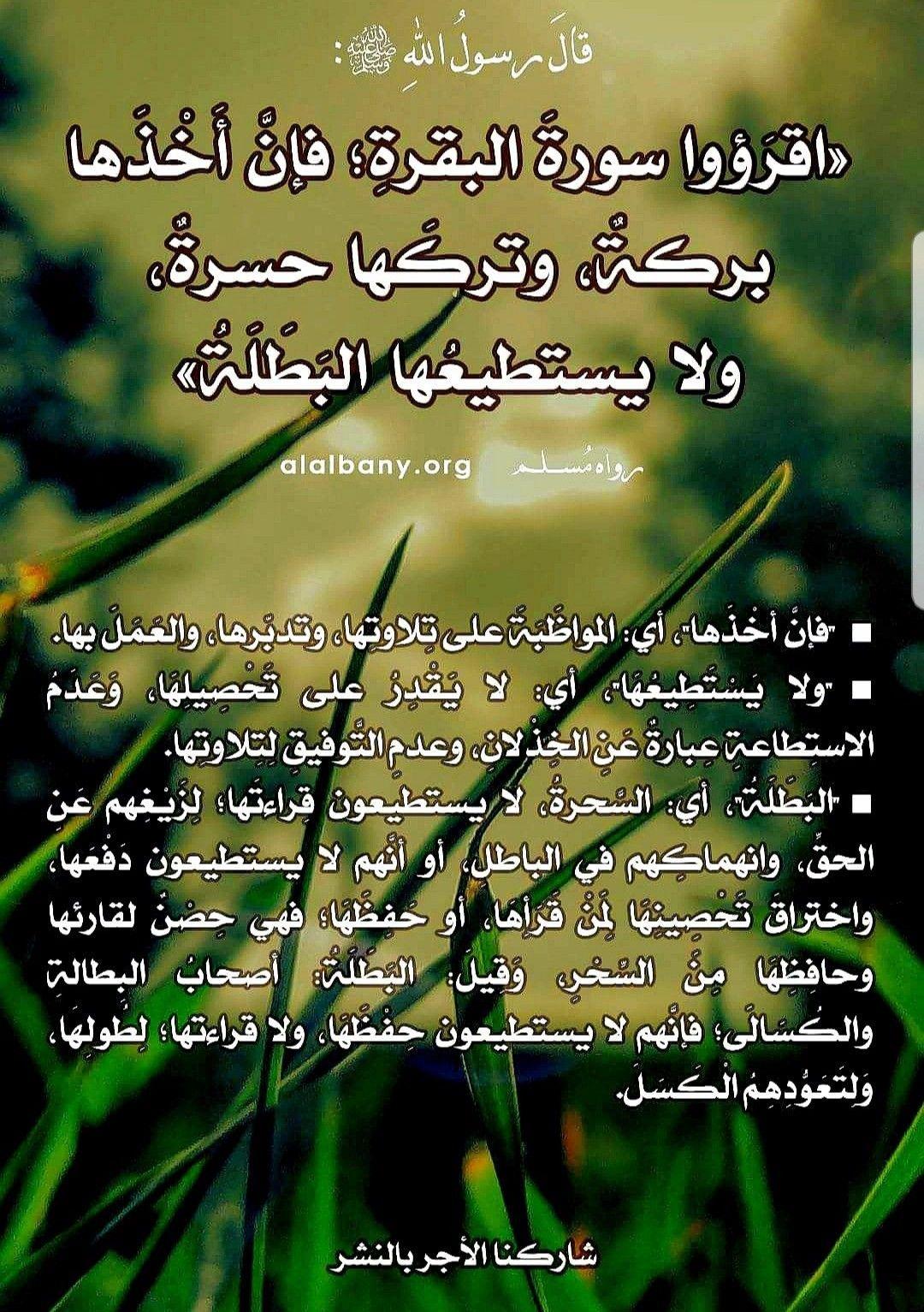 Pin By Hamid Amine On مختارات دينيه Herbs Parsley
