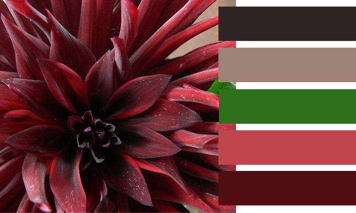 Kleurenkaart bloem  Made by APwonen