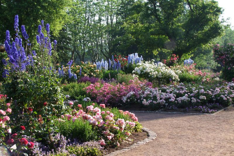 Rosengarten   Zweibrücken (D) / Gärten In Deutschland / Unsere Gärten /  Gärten Ohne