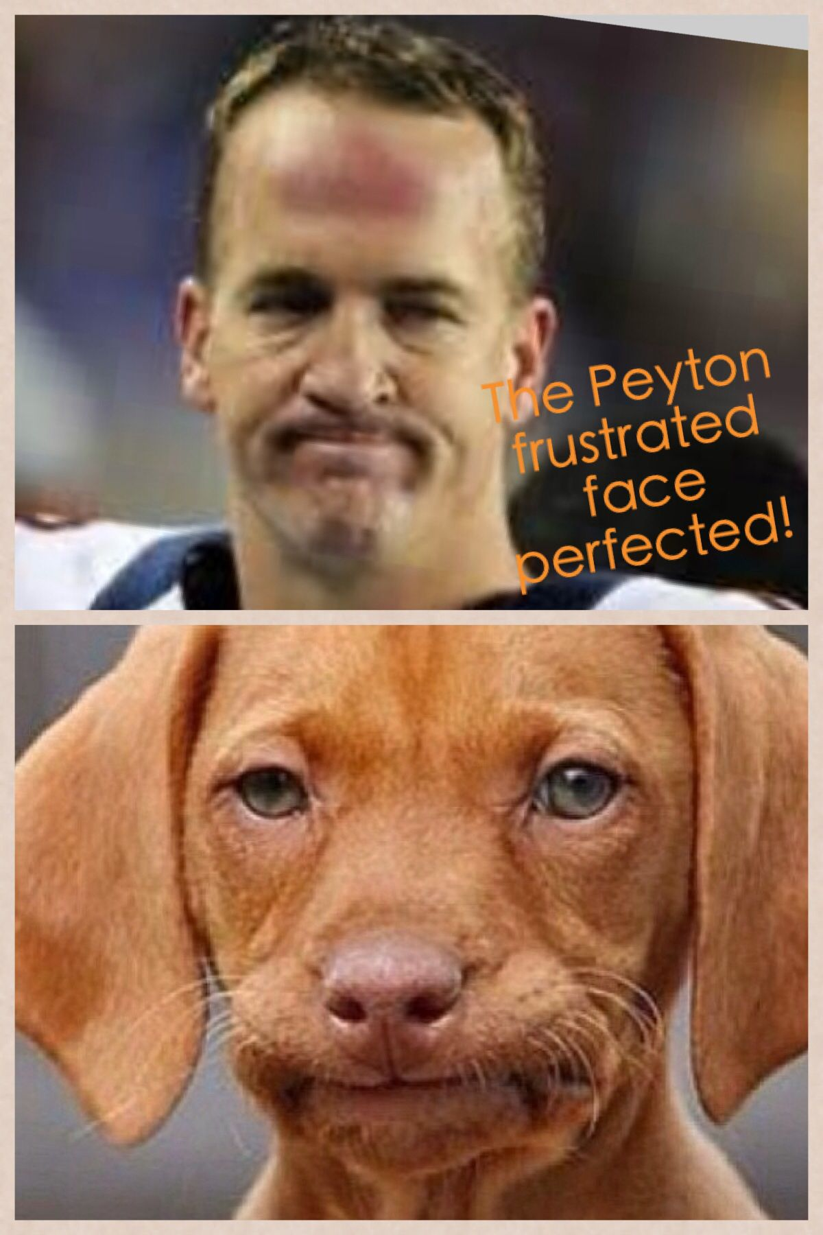 Peyton Mannings dog. Too funny! Check this out too