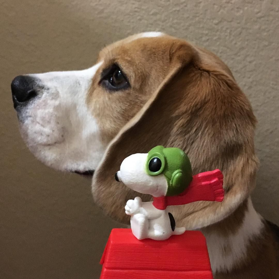 Popular Snoopy Beagle Beagle Adorable Dog - a20eac3200964d4ddbd180d6e0cf8886  HD_635232  .jpg