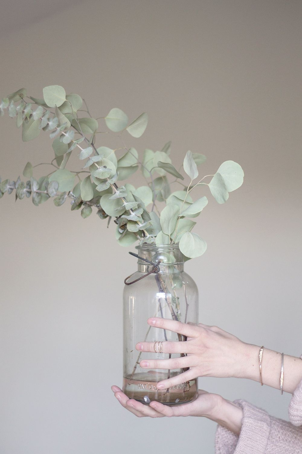 Recycled glass trend silver dollar plants and flowers dining or den eucalyptus polyanthemos silver dollar tree i would love to have this tree smells great and i would constantly use in a vase reviewsmspy
