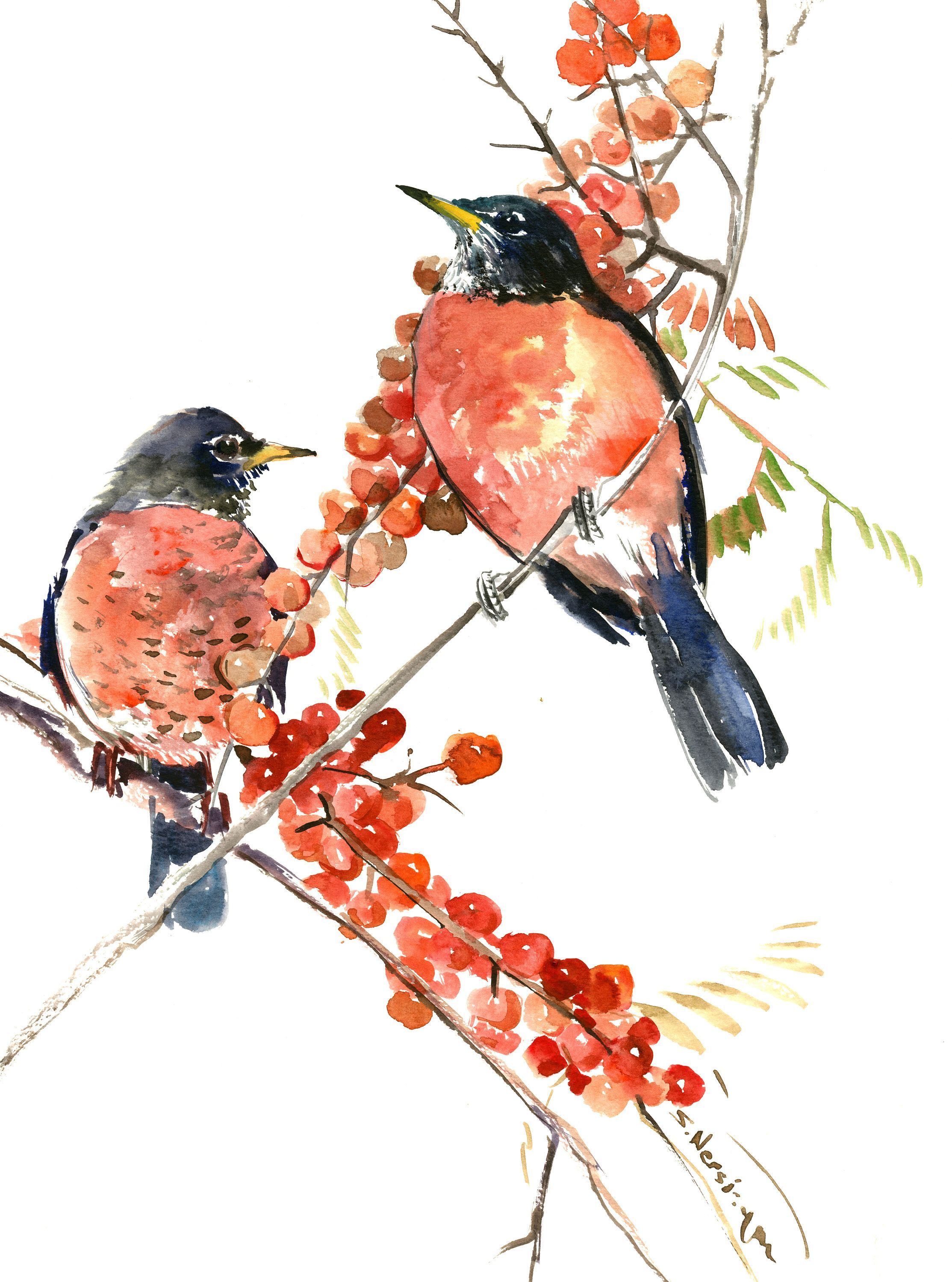 American Robin Artwork Bird Painting Birds And Flowers Birds