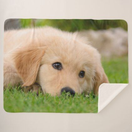 #Golden Retriever Cute Puppy Dreams Dog Head Photo Sherpa Blanket - #golden #retriever #puppy #retrievers #dog #dogs #pet #pets #goldenretriever