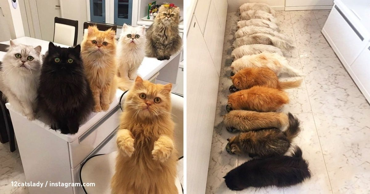 The daily life of a woman who adopted 12 cats