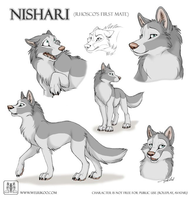 And Next Character Sheet Scribbles It 039 S Rhosco The Male Alpha Mate Of Desoto And Father Of Tani Kalimba And Canine Art Wolf Character Animal Drawings