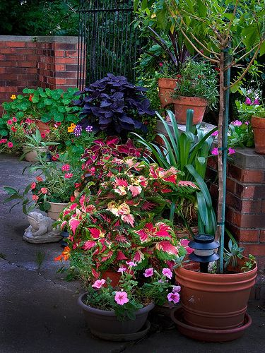 7 tips on how to use potted plants to dress up your landscaping the easy way