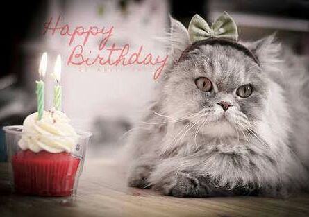 Funny Happy Birthday Cat Meme : Funny happy birthday cat pictures funny cute funny