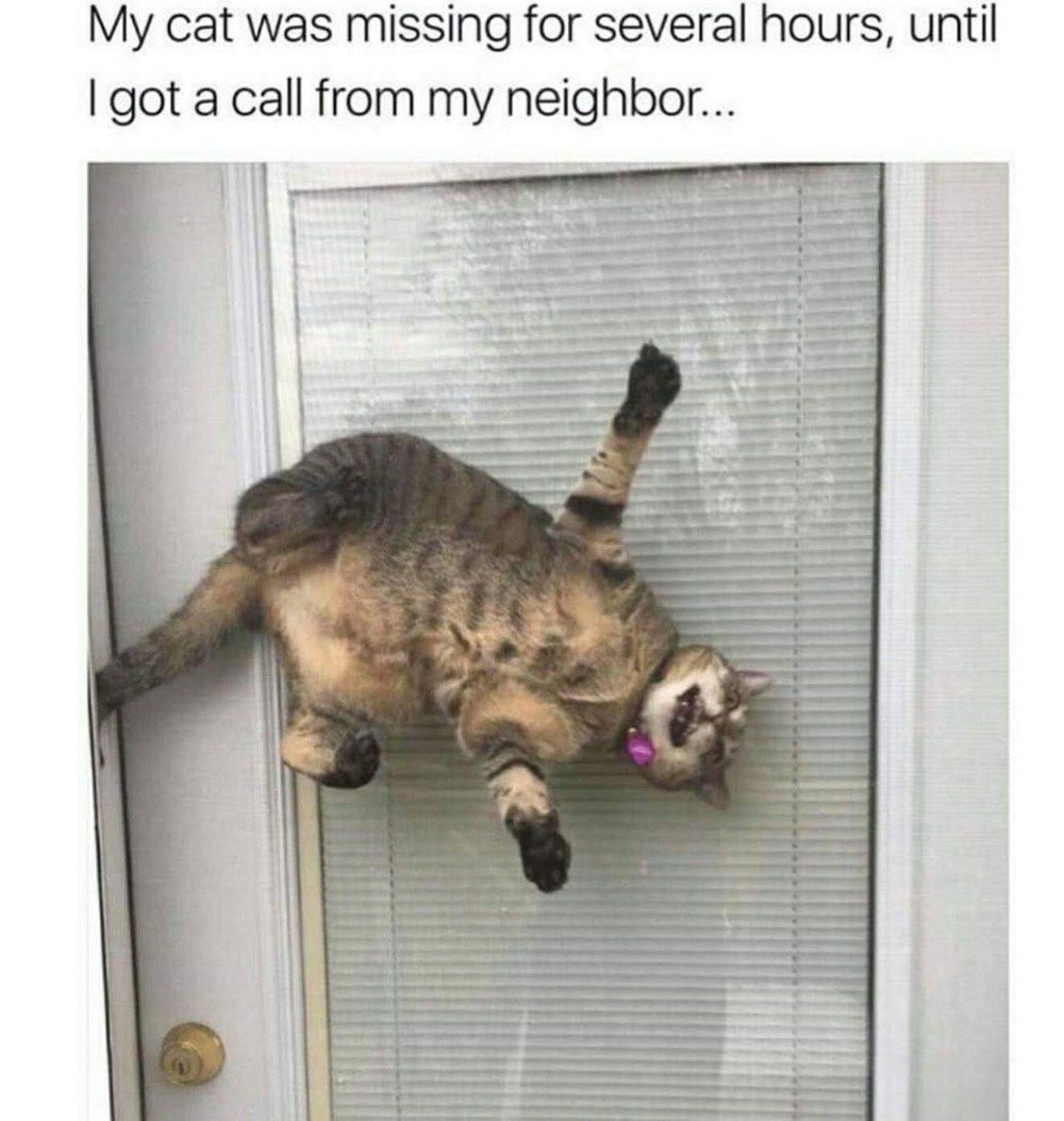 24 Stupid Cat Pics And Memes That'll Have You Feline Good