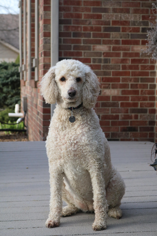 Adopt Sandy On Dogs Adoption Animals