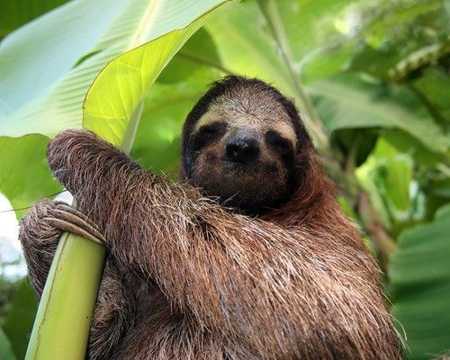 13 Of The Cutest Tree Dwelling Animals In The World Sloth