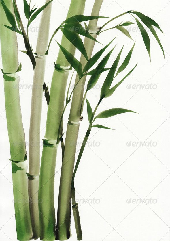 Watercolor Painting Of Bamboo Art Artwork Asian Background