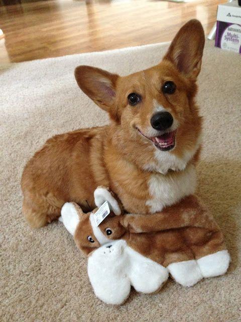 Thursday Adoptables Happy Ending Max And Rosie Corgian Of California Corgi Dog Corgi Cute Cats And Dogs