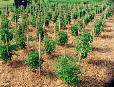 Best Way To Grow A Vegetable Garden Vegetablegarden 400 x 300