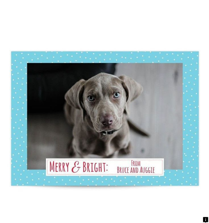 In 2020 holiday photo greeting cards puppy training