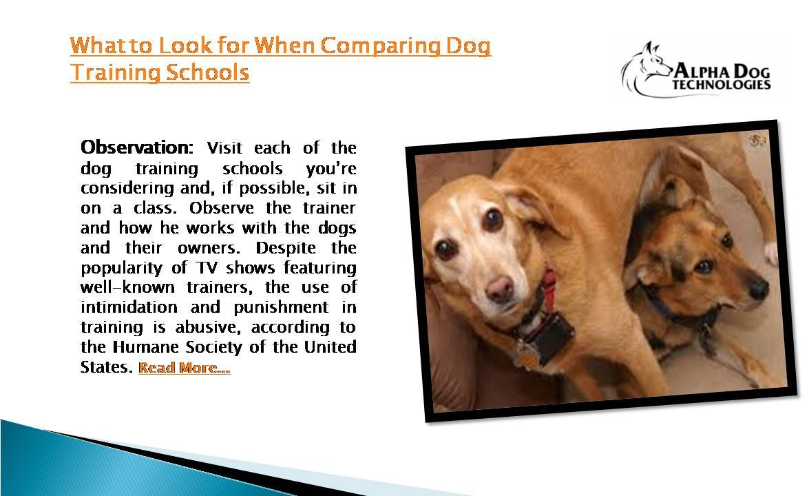 Observation Visit Each Of The Dog Training Schools You Re