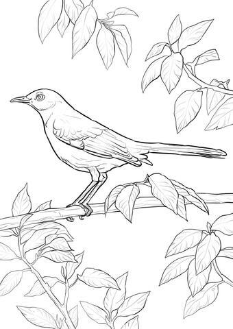 Northern Mockingbird Coloring Page Free Printable Coloring Pages Bird Coloring Pages Flag Coloring Pages Flower Coloring Pages