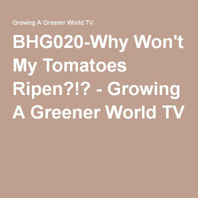 BHG020-Why Won't My Tomatoes Ripen