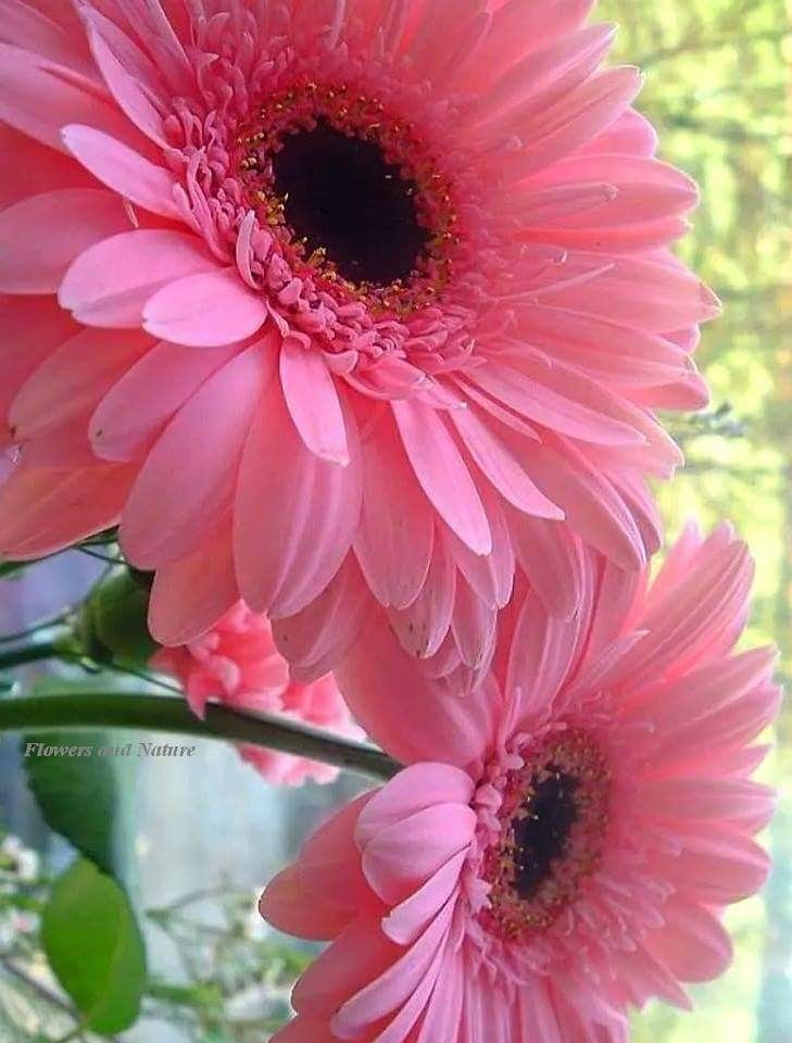 Pin By Irene Goh On Gods Creations Beautiful Flowers Amazing Flowers Pretty Flowers