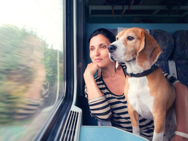 CRÓNICA FERROVIARIA: Derecho de transportar mascotas sin costo adiciona...