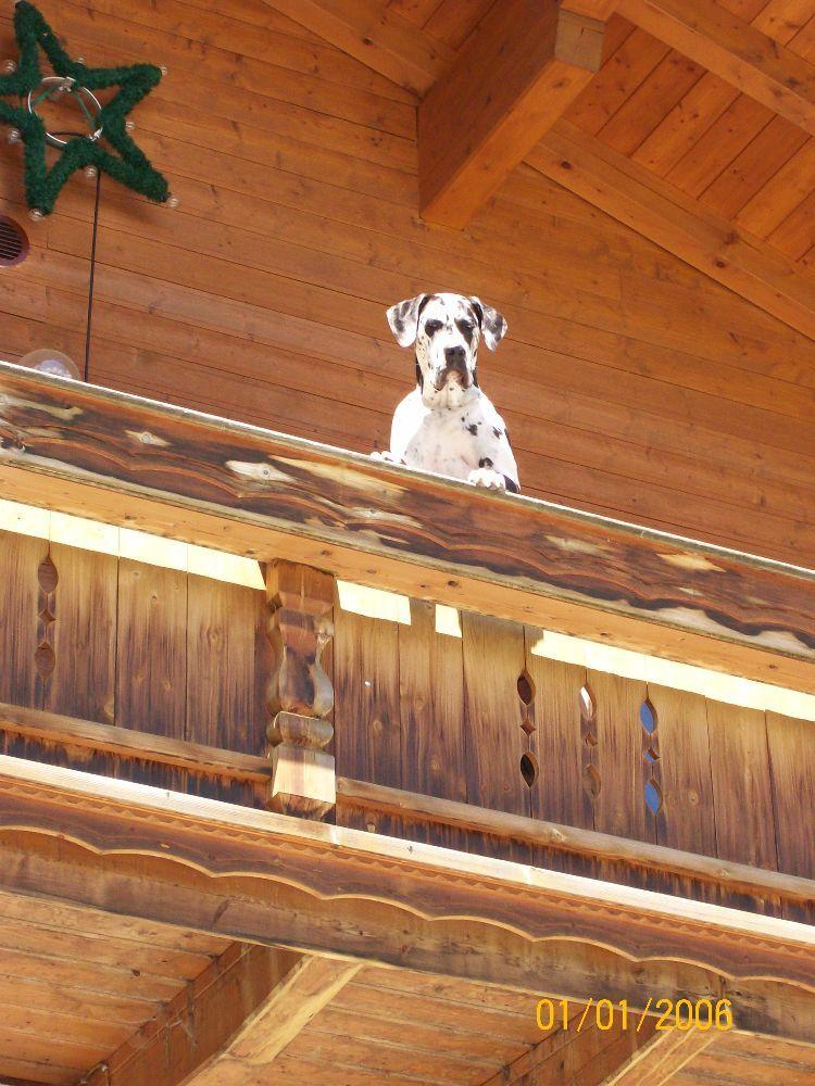 Hundepension Zu Verkaufen Mit Grossem Haus Und Anwesen