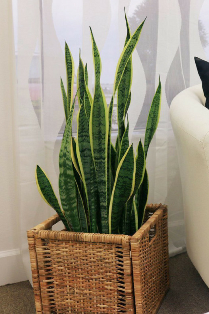 You Can Now Buy House Plants On Amazon Like This Indoor 400 x 300