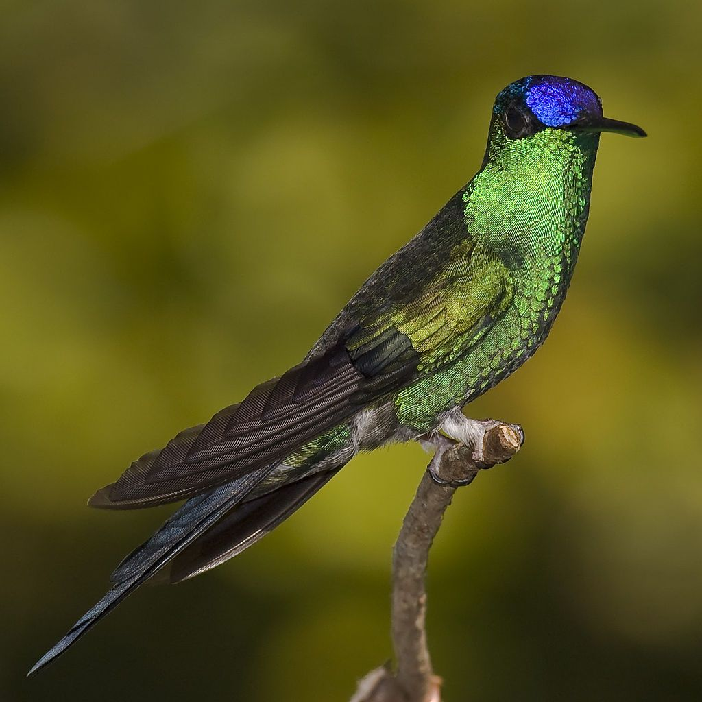 15 Beautiful Brazilian Birds And Where To Find Them