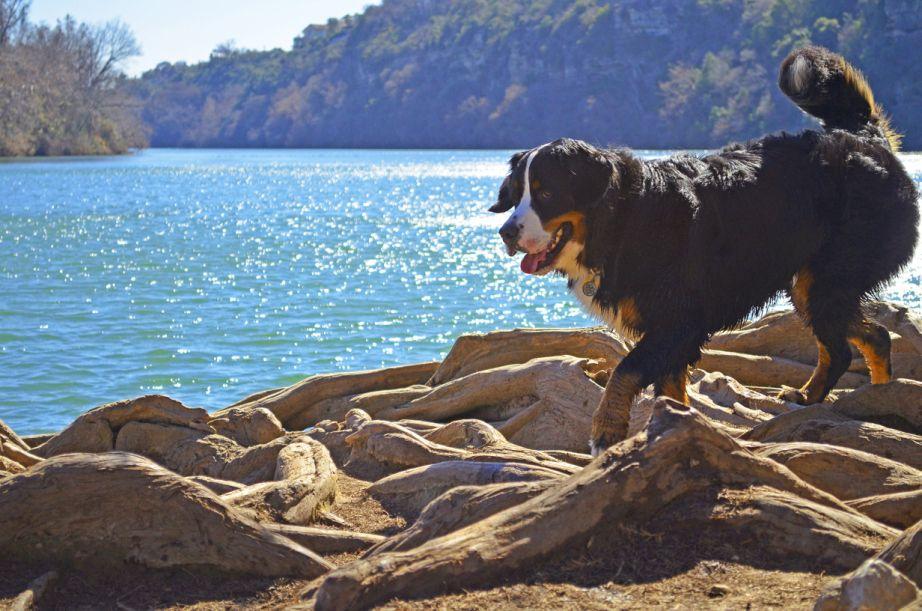 Red Bud Isle Park Dog Runs Dog Photography Best Dogs