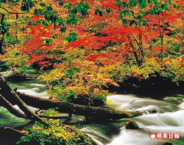 位於日本東北的奧入瀨溪,在楓紅陪襯下美景宜人。