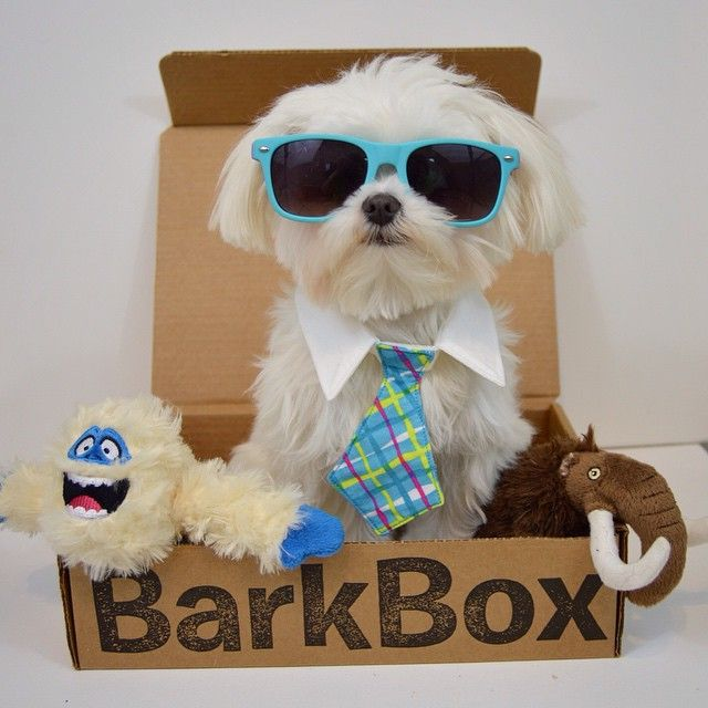 Dude I loved my Barkbox this Month!
