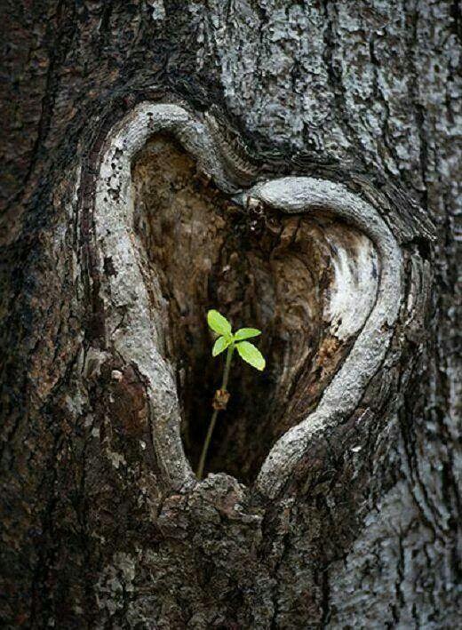 En donde quiera...ahí esta Madre Naturaleza