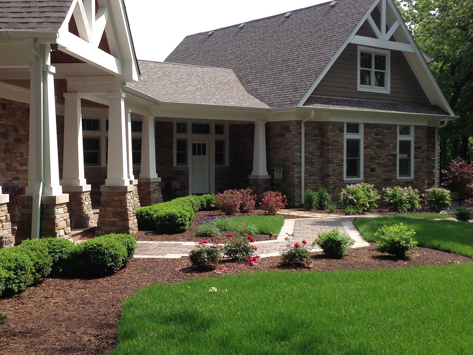 A Boxwood foundation planting with Knockout Roses and ...