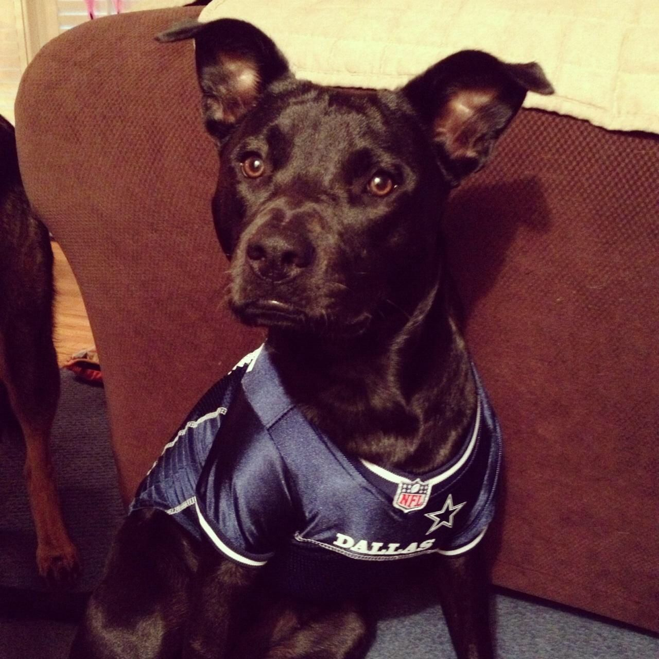 Nala supporting the Cowboys