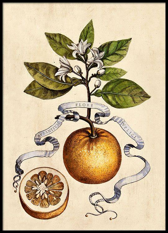 Juliste appelsiinin ja lehden kuvalla.