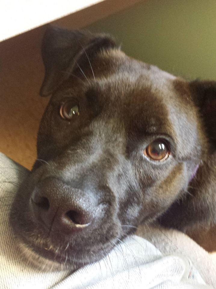 Free pet adoption weekend in Madison - WKOW 27: Madison, WI