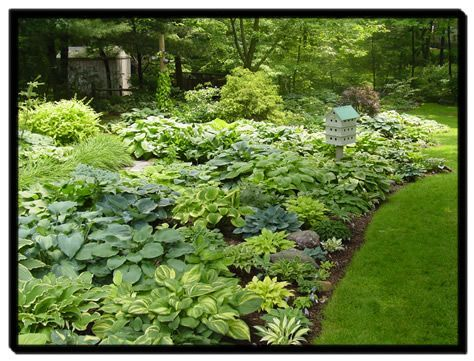 Hosta garden. Wow...look at all the different varieties. And I love that birdhouse!