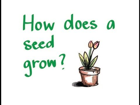 A quick and simple, kid-friendly white-board animation of how a plant grows from a seed. The video introduces concepts of germination and photosynthesis.