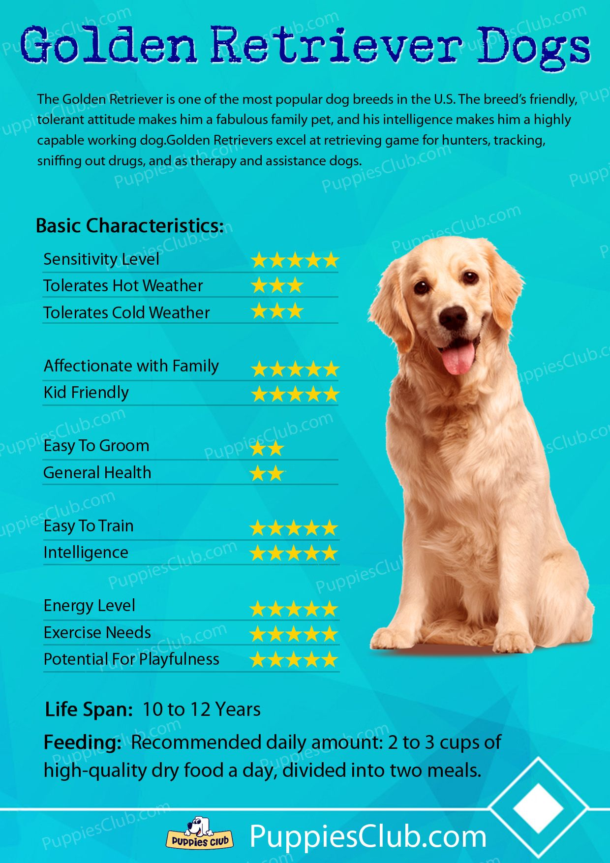 Labrador: breed description, character, photo 4