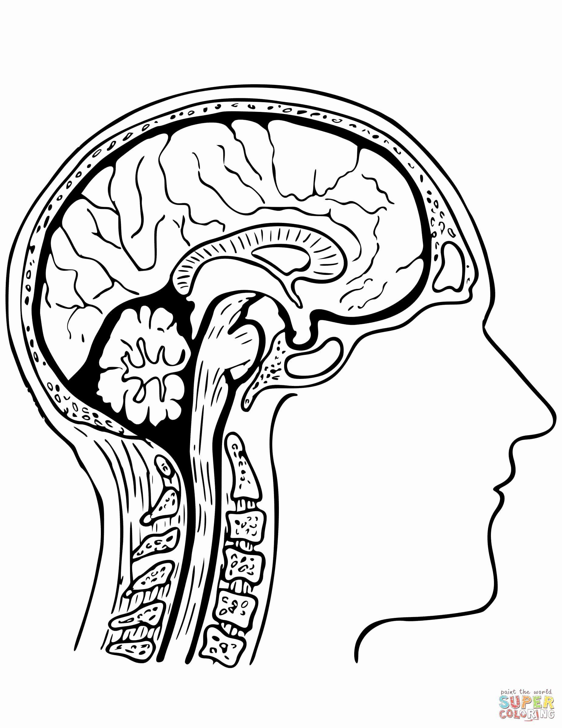 Human Brain Coloring Book Elegant 28 Human Brain Coloring Book In 2020 Coloring Books Coloring Pages Coloring Book Pages
