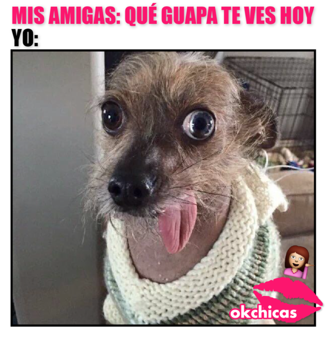 20 Divertidos Memes De Perros Que Te Haran Llorar De Risa Memes Perros Memes Chistosisimos Llorando De Risa