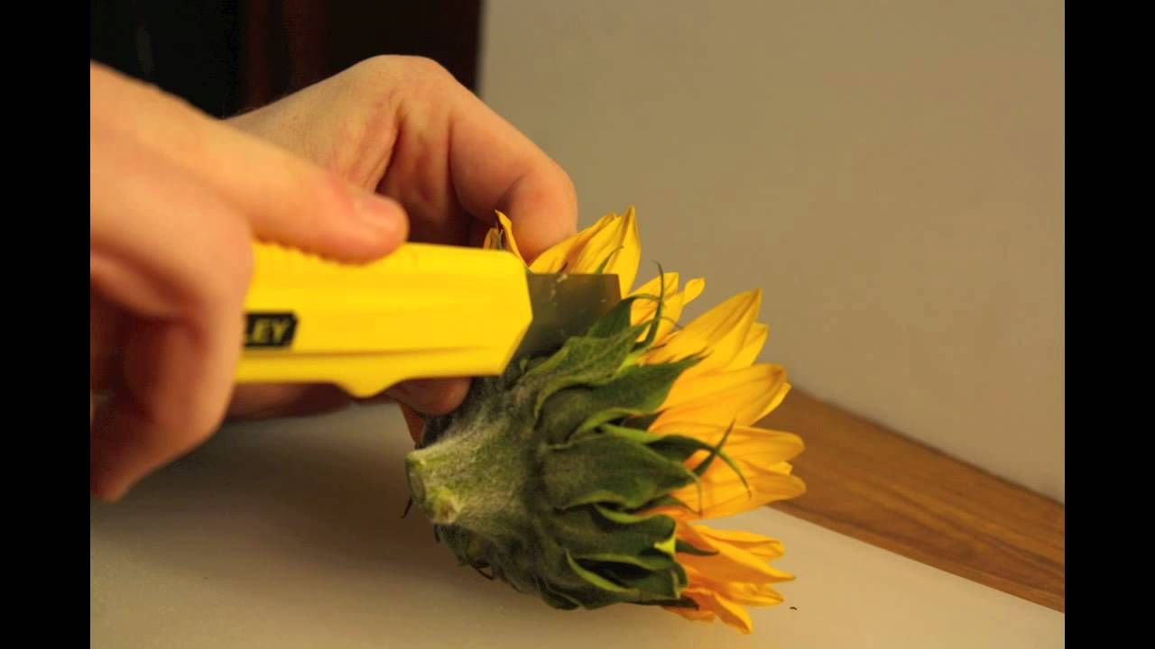 Dissect Sunflower Google Search Educational Garden Science Journal Five In A Row