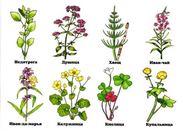 Фото цветов лесных