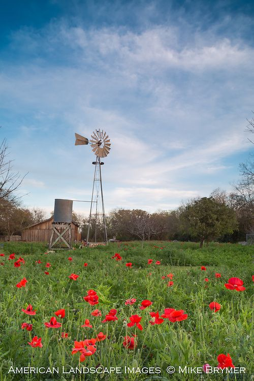 Texas, windmill, poppies, country, farm, ranch | Windmills