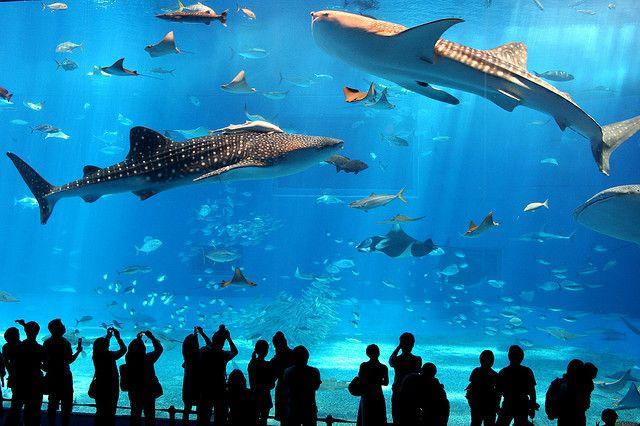 Fish Tank Georgia Aquarium