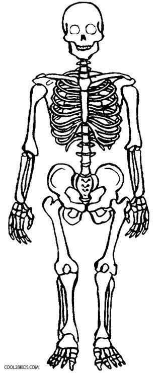 Skeleton Coloring Pages Animal Adult Coloring Book Animal