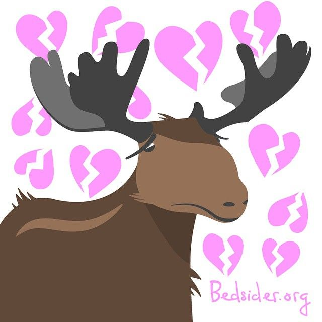 Moose cannot have sex on state-owned roads in Alaska. Man, AK! Why you gotta be so cold?! #crazysexlaws